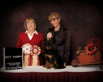 """Popo"", also known as ""Paul"", Infinidad Grandville Te Amo; Best Puppy In Show! Co breeders Tracie Laliberte and Leila Grandemange"