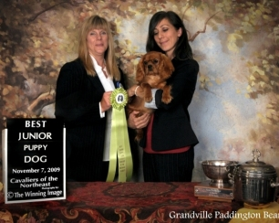 Best Junior Puppy Dog! Grandville Paddington Bear JW; Best Junior Puppy In Show.