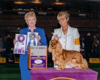 CH Grandville Butterscotch Kiss. Westminster KC. Owner Tracie Laliberte, Bred by Leila Grandemange