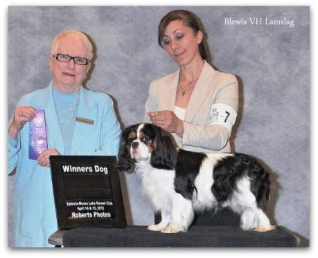Winner's Dog! Blewis VH Lamslag at Grandville