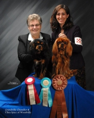 "Grandville ""Chandler"" with Ultra Spice of Woodville; Best Black and Tan in Show and Best Ruby in Show"