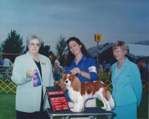 AKC CH Springsteen of Woodville at Grandville