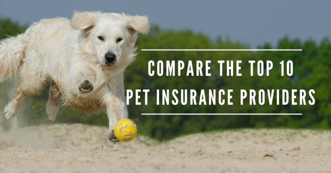 Compare the top 10 pet insurance providers